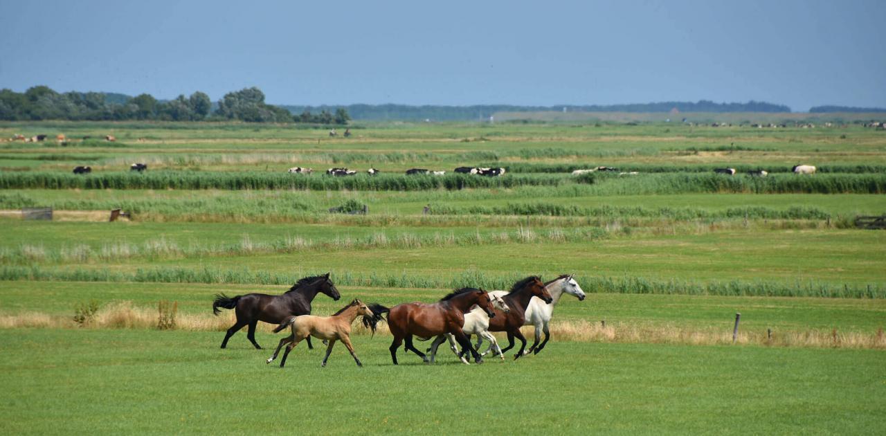 paard mee naar Terschelling